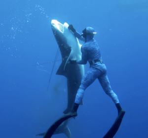 Diver Tackling Shark